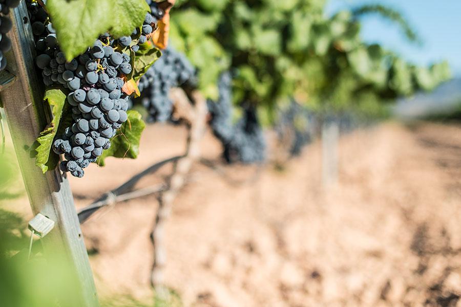 vinícola Douro Portugal