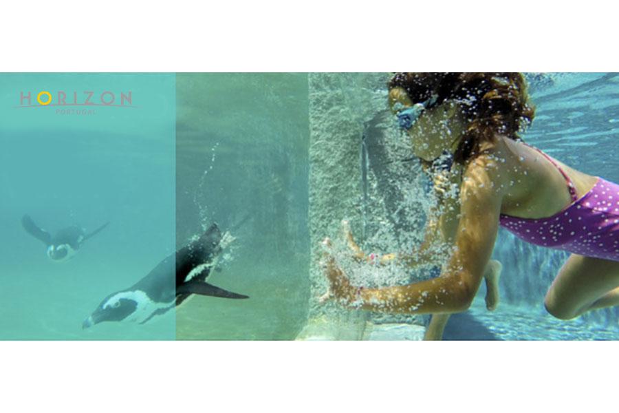 Nadar com pinguins